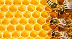 Практична школа бджільництва